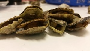 Doping oysters and stealing their embryos