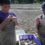 Students checking oysters for brooding with zip ties.