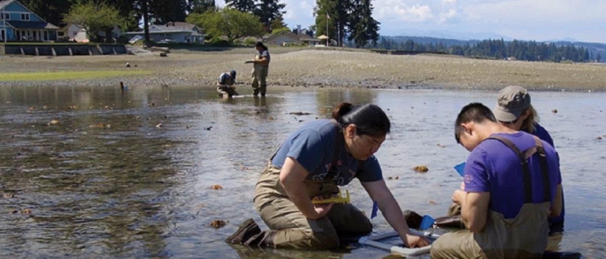Restoring Puget Sound