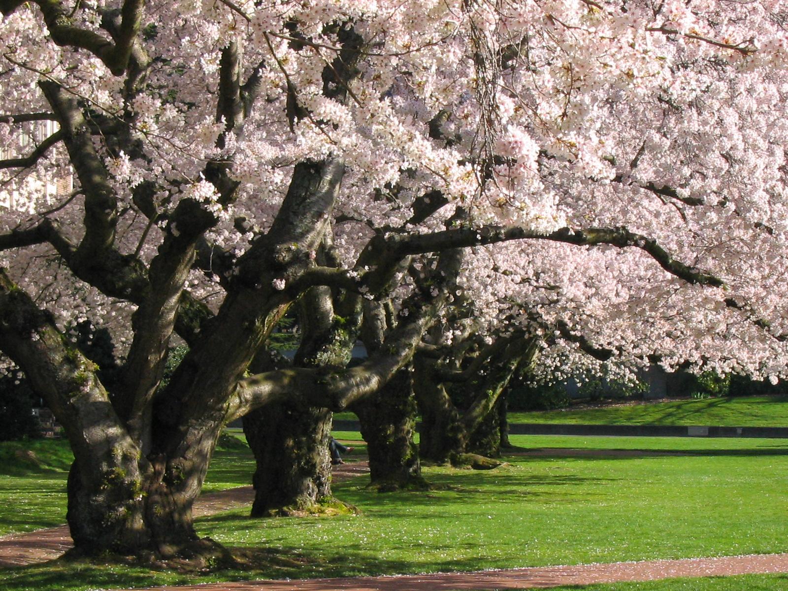 quad_Spring