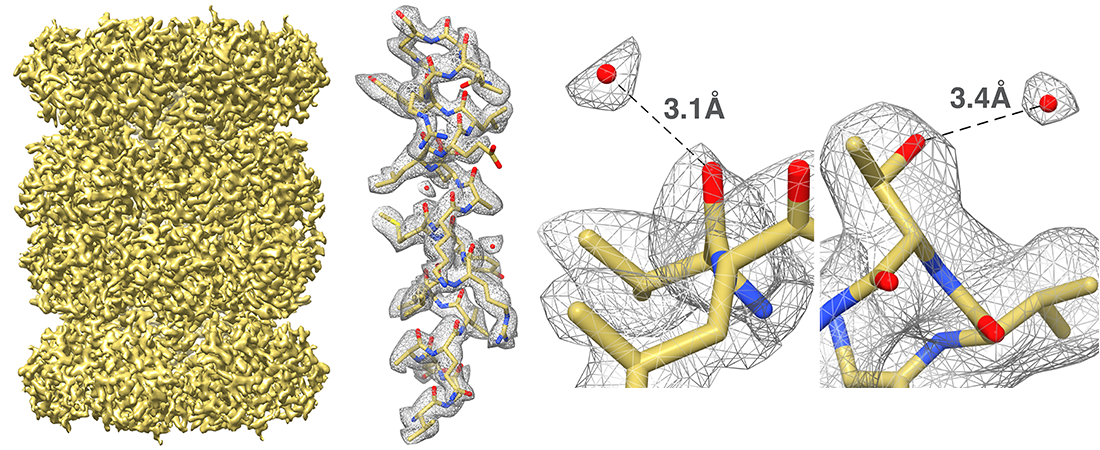 Thermoplasma acidophilum 20S proteasome. Reference: Campbell MG, Veesler D, Cheng A; Potter CS and Carragher B. 2.8 Å resolution reconstruction of the Thermoplasma acidophilum 20 S proteasome using cryo-electron microscopy. eLife 2015;10.7554/eLife.06380