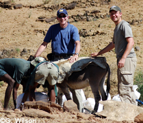 Mark & Randy donkeys1