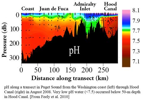Dr Julie E Keister Ocean Acidification