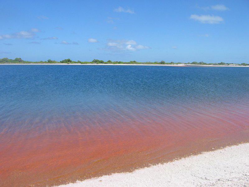 ttp://faculty.washington.edu/jsachs/lab/www/Research/Kiribati_Expedition_2005/Xmas_Pond_Red.jpg