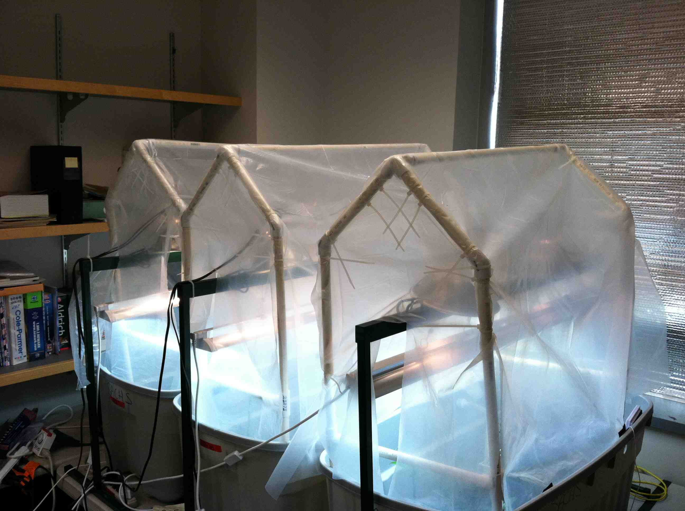http://faculty.washington.edu/jsachs/lab/www/Research/Mangrove_Cultures_UW/Mangrove_tents_sm.jpg