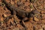 Agama sankaranica
