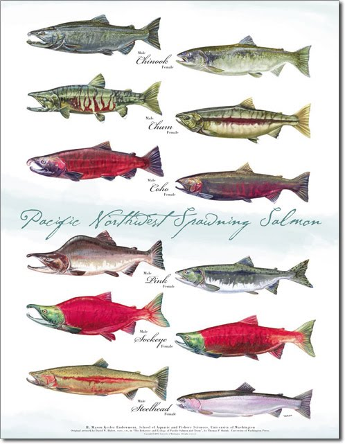 an introduction to the nature of salmon The pacific salmon treaty: a brief truce in the canada/usa pacific salmon war introduction 1 nature of the resource 2 events leading up to the signing of the pacific salmon treaty 3.