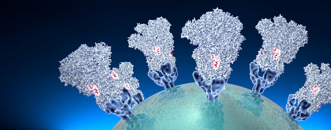 Coronavirus spike structure